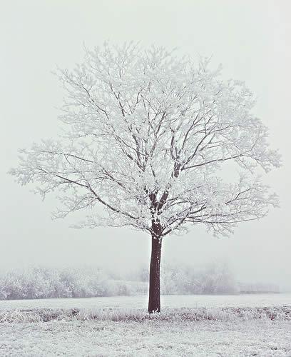 arbre-hiver